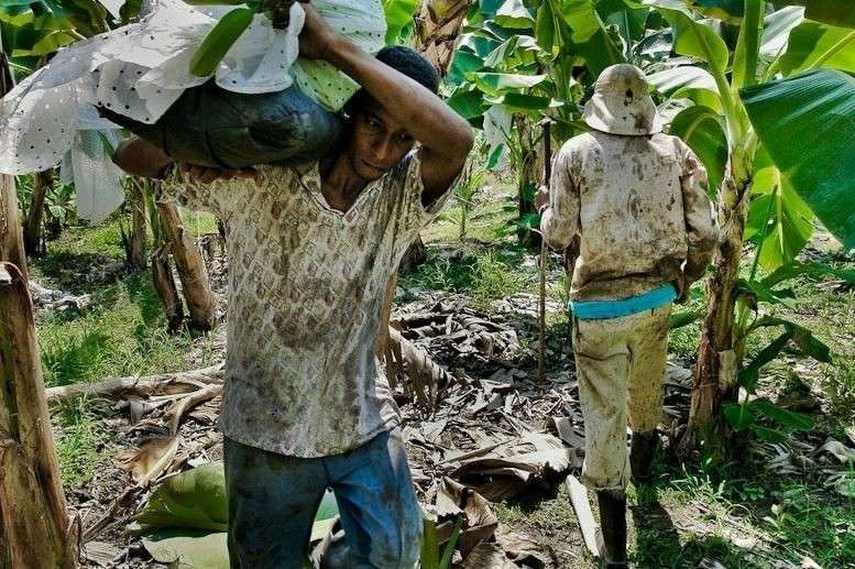 Сельхозработники на плантациях в Латинской Америке. Фотография: jansochor.com