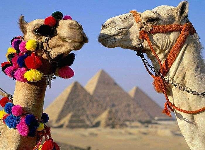 Египет и ТС - соглашение о сотрудничестве
