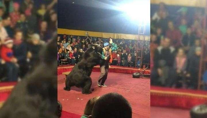 Огромный медведь атаковал дрессировщика во время циркового представления в Карелии