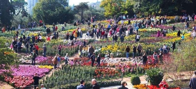 В Крыму открылся Бал хризантем