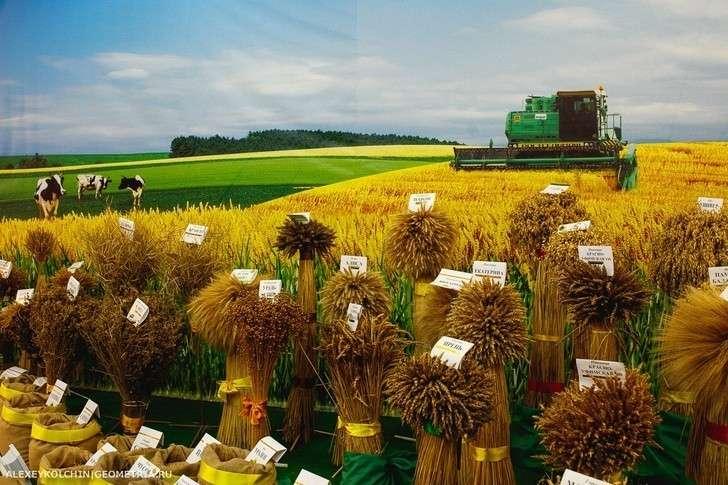 Ячмень уральской селекции дал рекордный урожай зерна в России