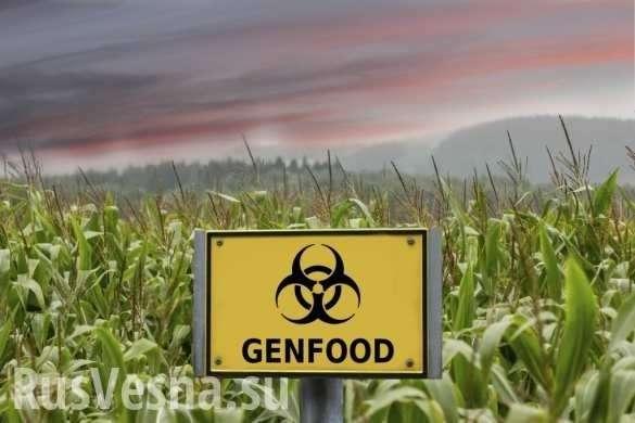 Американская мечта смерти: в США обнаружены новые жуткие последствия от ГМО | Русская весна