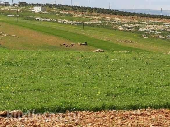 Сирия. Тревожные вести из «заповедника гоблинов» Идлиба   Русская весна
