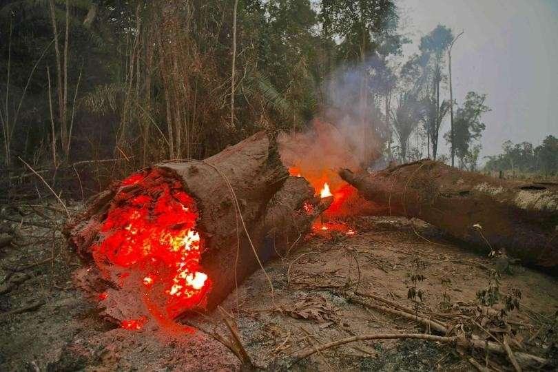 В Бразилии поймали экологов на поджоге лесов Амазонии ради пожертвований