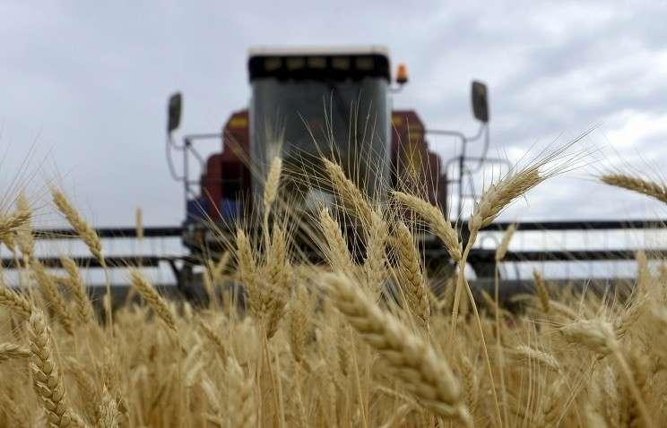 В Эквадоре заместят часть канадской пшеницы российской