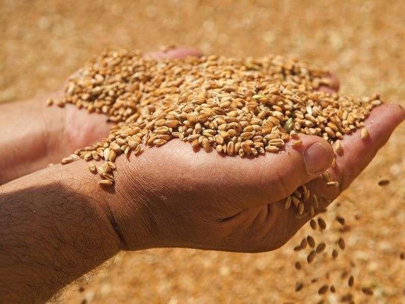 Россия в 2019 году собрала 120 млн тонн зерна