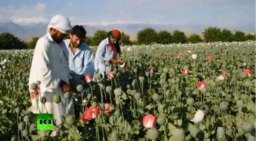 Бурный рост производства наркотиков в Афганистане угрожает международной безопасности