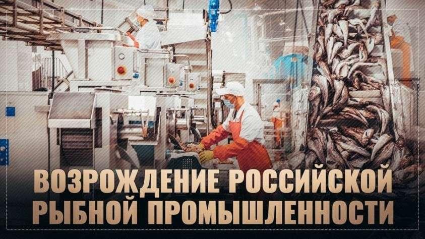 В России бум в рыбной промышленности. Огромные заводы строят по всей стране