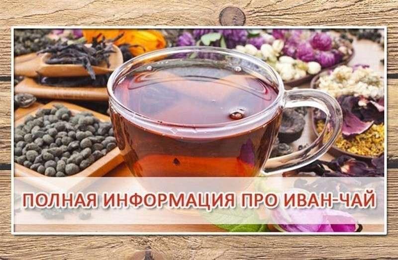 Вся информация – уникально полезный русский Иван-чай