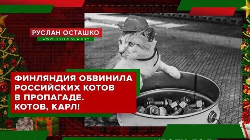 В Финляндии допились до обвиняя российских котов в пропаганде