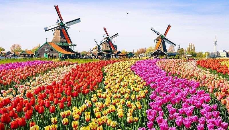 Нидерланды официально отказались от названия
