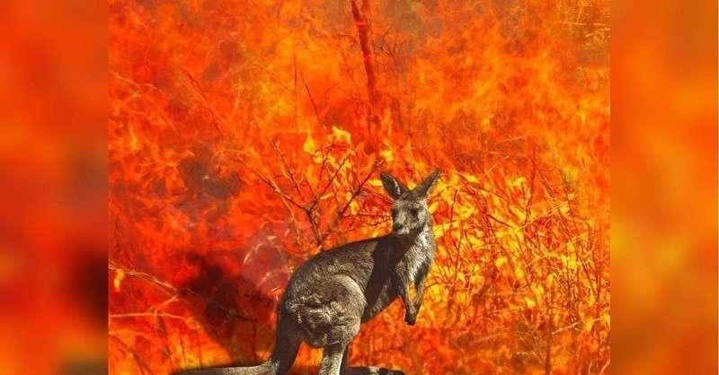Более 1 млрд животных погибли в Австралии из-за лесных пожаров