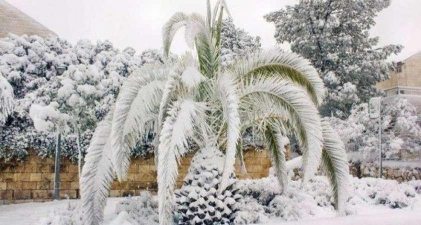 Алжир и Марокко завалило снегом. Аномальные холода накрыли северо-западную часть Африки