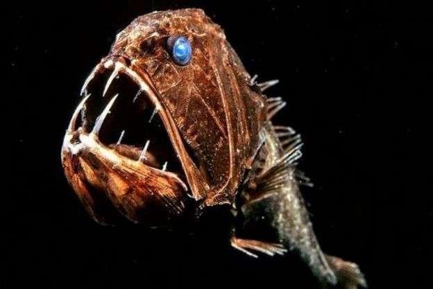Рыба-клыкачка