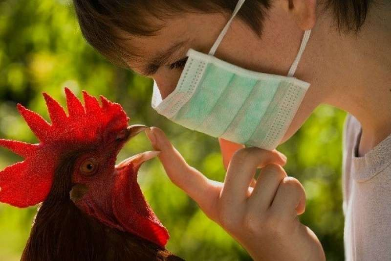 Во Вьетнаме и СА зафиксировали вспышки высокопатогенного птичьего гриппа