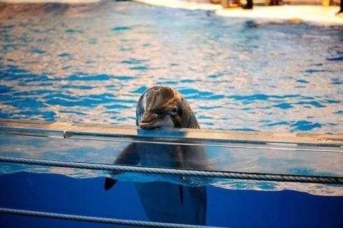 Дельфины – уникальные жители планеты Земля, в некоторых странах дельфинов признали личностями