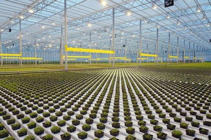 Итоги 2019: В 2019 году в России открылось 278 предприятий агропрома