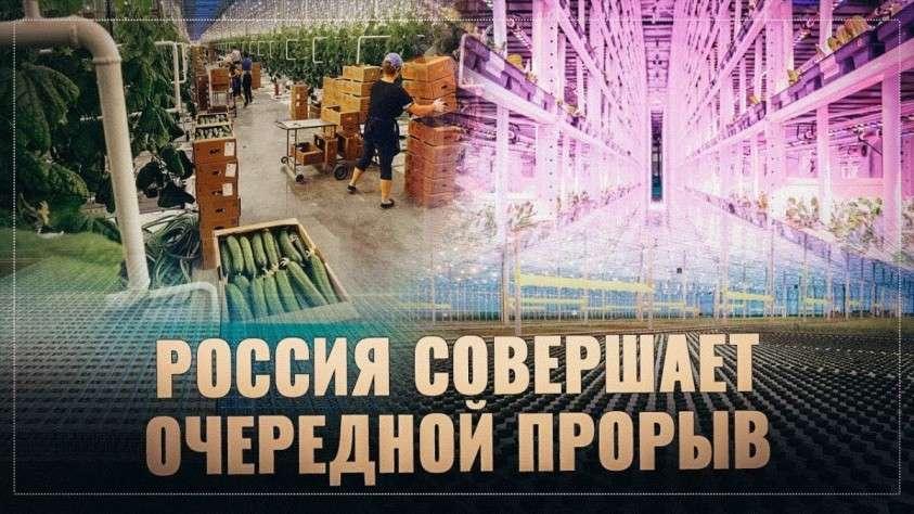 Тепличный бум: Россия совершает очередной прорыв в АПК