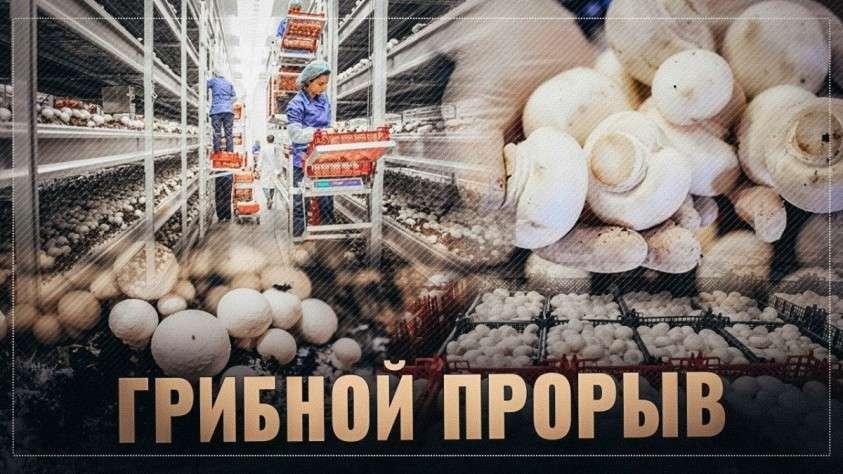 Выращивание грибов в России поднимается на новый уровень