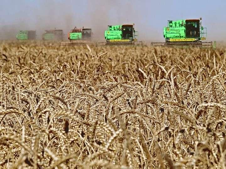 Минсельхоз: сбор зерна в РФ составил 110 млн тонн в первоначальном весе