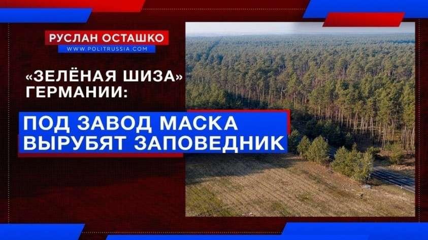 «Зелёная шиза» Германии: под завод Маска вырубят заповедный лес
