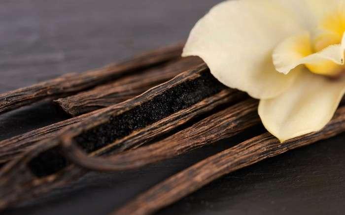 Настоящая ваниль – это стручки орхидеи Vanilla planifolia. /Фото: static.timesofisrael.com