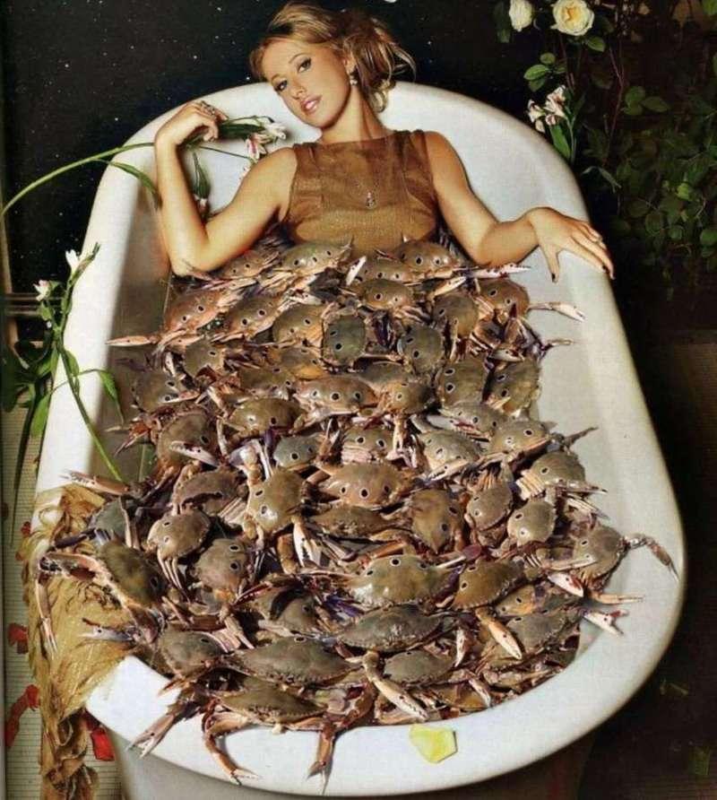 Рецепт от «Миссис Крабс» – Ксении Собчак: как «крабить накрабленное»