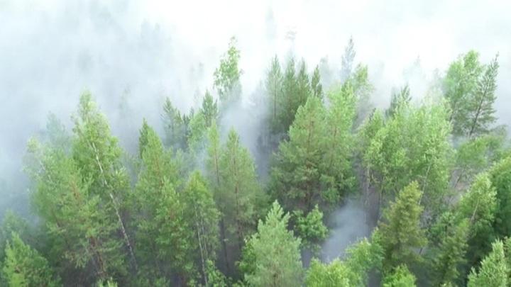 Аномальная жара на Урале – леса полыхают