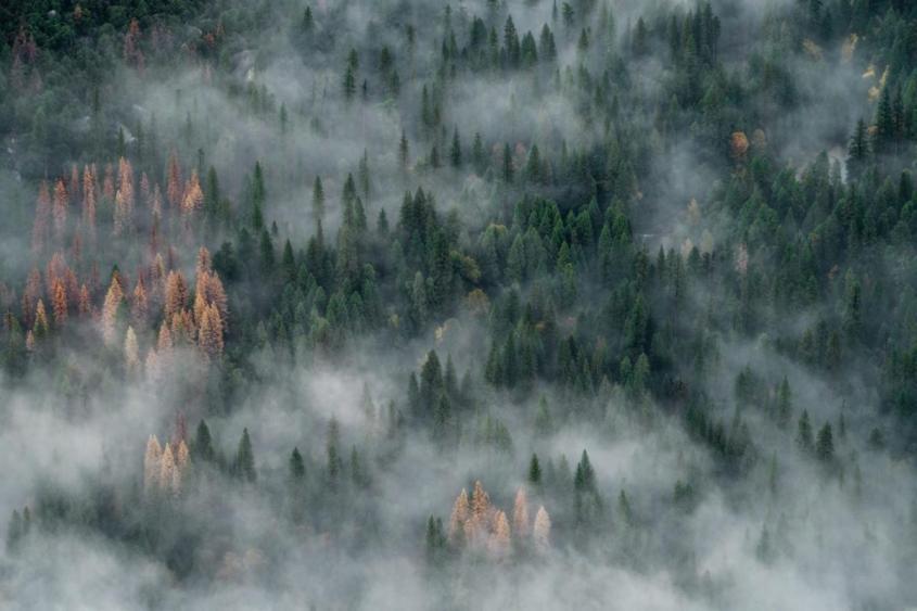 Лесные пожары в Амазонии увеличилась на 28%