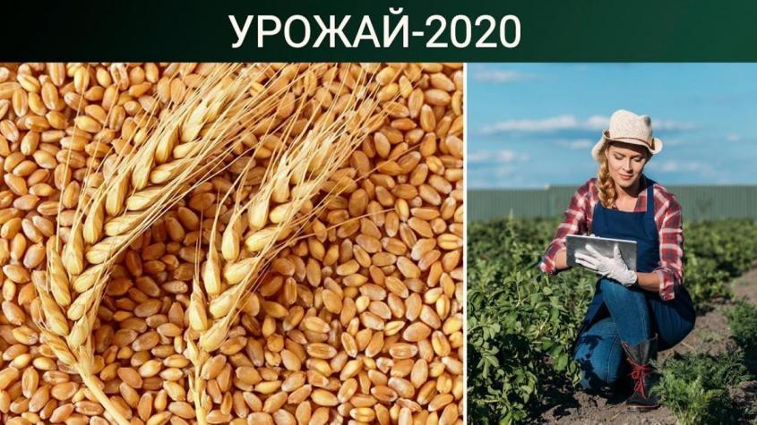 Россия – пшеничный лидер. Дорогая гречка. В Крыму растут надои
