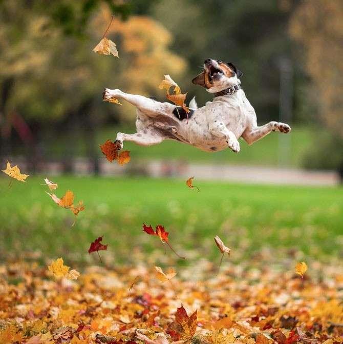 Лучшие фотографии ноября 2014