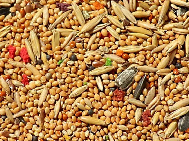 Тайна загадочных семян, которые рассылаются из Китая в западные страны