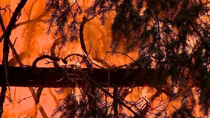 Пожары в Калифорнии стремительно охватывают новые территории