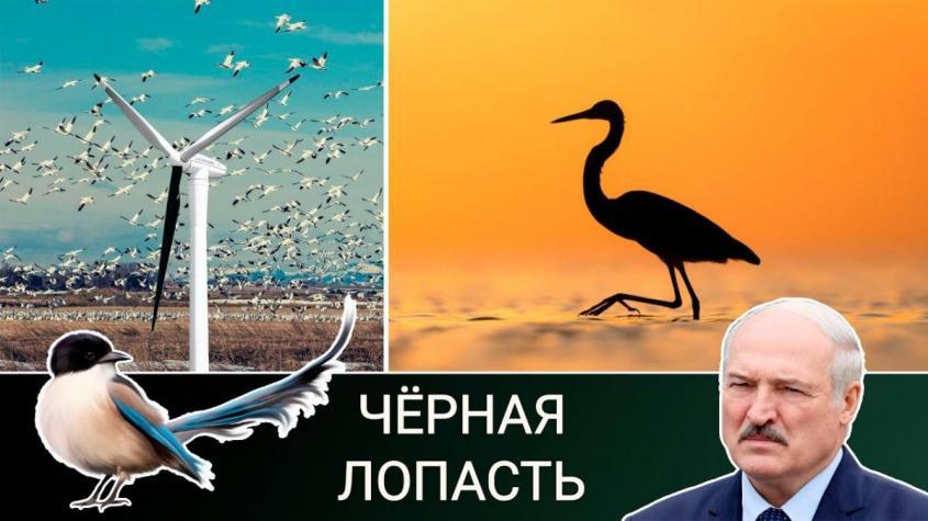 Ветряки убивают птиц и вызывают рак. Газ лучше ветра, а Литва погружается в кризис