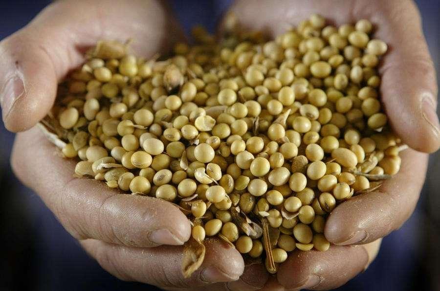 Правительство выступило против запрета на ГМО, предложенного Президентом Путиным