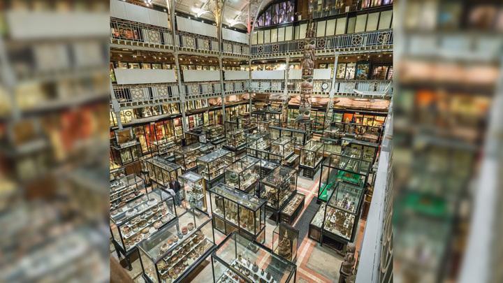 Из Оксфордского музея убрали сушеные человеческие головы, чтобы скрыть кровожадность и примитивизм