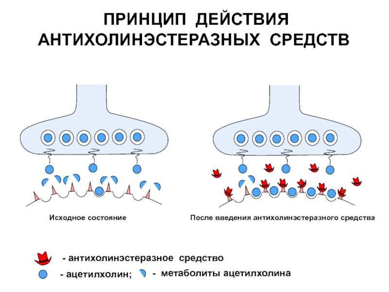 Три источника и три составных части ядовито отравляющего навальнизма